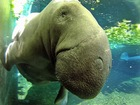 Florida survey spots record number of manatees
