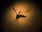 Indiana has its first case of Zika virus