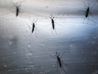 Mosquitoes now spreading Zika virus in US