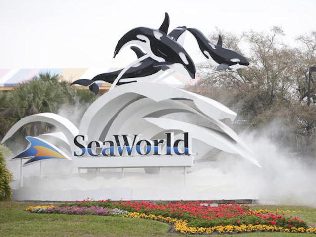 Dolphin snatches iPad of woman taking its photo at SeaWorld