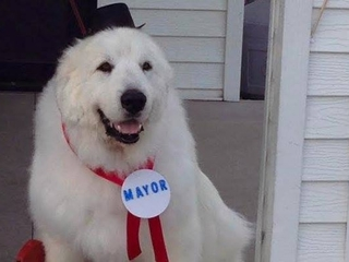 A Minnesota dog has been elected mayor 3 times