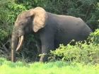 Elephants need 90 years to recover from poaching
