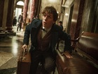 'Moana,' 'Fantastic Beasts' rule box office