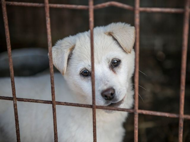 200 dogs raised for meat rescued