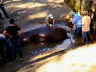 Hippo dies at zoo after vicious attack