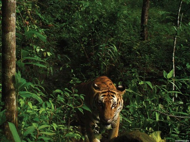 technology thailands department national parks wildlife