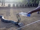 Villagers use water bottle to hydrate Cobra