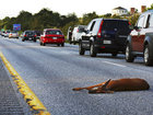 Roadkill can be used for food in Oregon