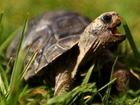 Man charged in death of pet tortoise