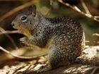 Missing squirrel hunter found safe in Monroe Co.