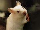 Mice eat car wiring, causing hundreds in damage