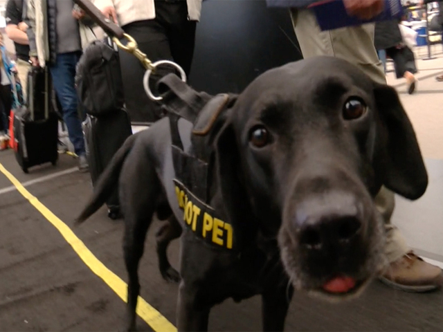 Dogs named in memory of first responders carry on legacy