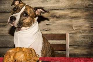 Shelters ask families to host pets for holidays